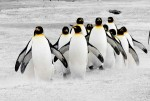 Penguins_on_the_Move_600